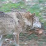 Промовка про вовка