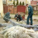 Знищення браконьєрських сіток. Фото з сайту www.2000.cv.ua