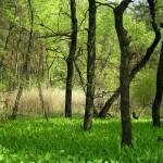 Самарський ліс. Фото з сайту 7chudes.in.ua