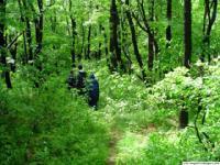 Чорний ліс