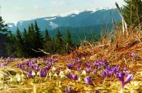 Карпатський біосферний заповідник та Синевирський національний парк стануть більшими