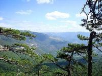 Ялтинський гірсько-лісовий заповідник