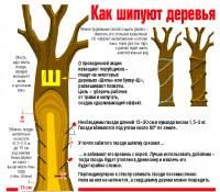 Как шиповать деревья