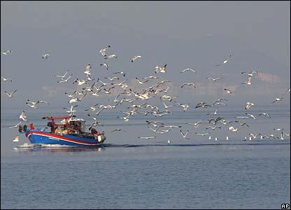 У Чорному морі затримали 2 турецькі шхуни, які полювали на дельфінів