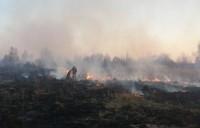 На Сумщині врятували лісовий заказник національного значення від пожежі