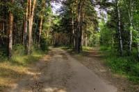 Біличанський ліс приєднали до Голосіївського НПП