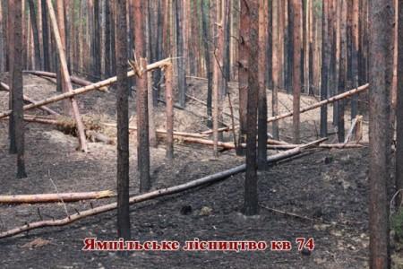 """Національний природний парк """"Святі гори"""" після обстрілів. Фото Віктора Стороженка"""