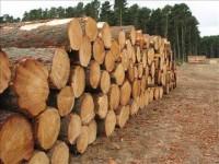 Набув чинності закон про заборону експорту лісу-кругляка