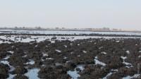 У Нижньодністровському нацпарку згоріло дві тисячі гектарів очерету, але дирекція налаштована оптимістично