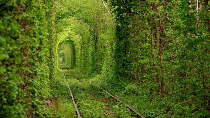 Тунель кохання (поблизу с. Клевань, Рівненська обл.)