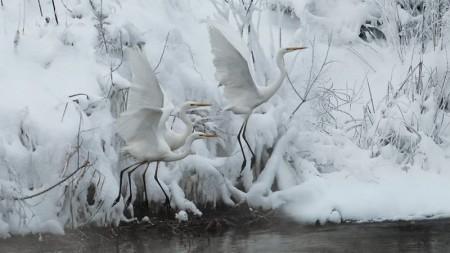 Фото зроблене на території ставків Осокорків. Січень 2016.