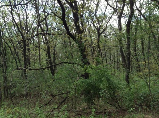 Самарський ліс
