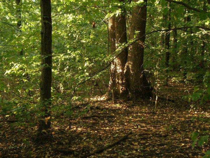 """Результат пошуку зображень за запитом """"ліс"""""""