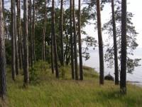 12-06-10 НПП Білоозерський. Фото А.Плиги