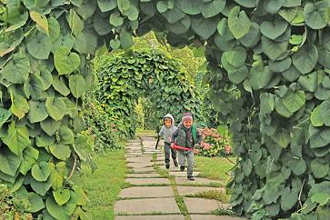 Сад витких рослин — чудове місце для ігор і романтичних побачень