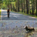 рай для туристів та тварин