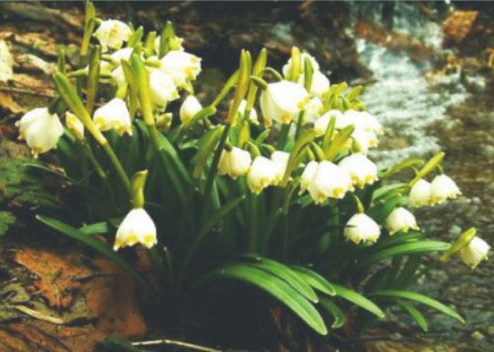 Короткий опис видів | Збережи весну!